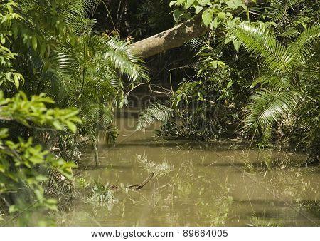 detail on Bardia National Park jungle, Nepal
