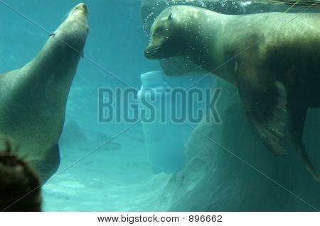 A Pair Of Seals