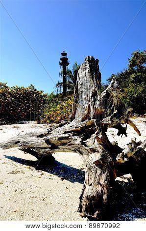 Driftwood log on the beach