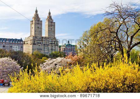 New York City - Central Park Spring Landscape