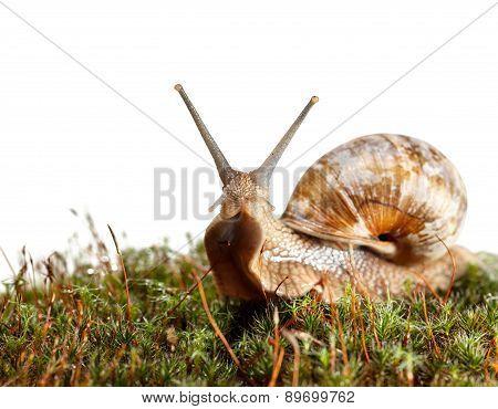 Snail En Face