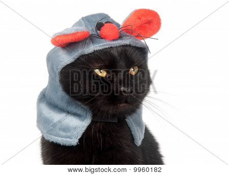 Black Cat With Mouse Hat