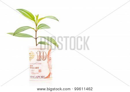 Concept Of Green Plant Grow On Singapore Dollar Currency Note