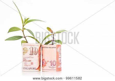 Concept Of Green Plant Grow On Malaysia Ringgit Against Singapore Dollar Currency