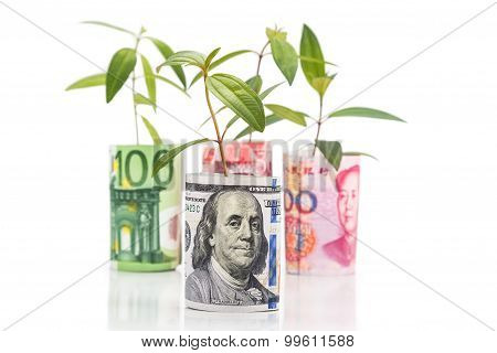 Concept Of Green Plant Grow On Currency With Usd In Foreground