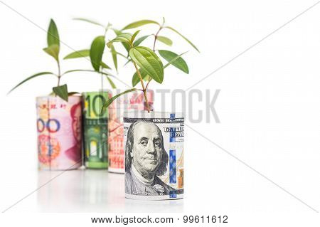 Concept Of Green Plant Grow On Currency With Us Dollar In Foreground