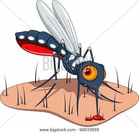 Mosquito sucks blood to the skin