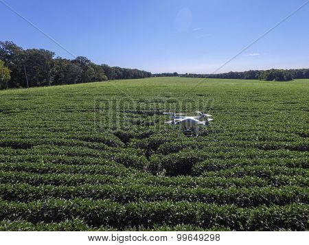 St.Louis Missouri. -August 24th : Editorial photo of a DJI Phantom drone in flight with a mounted GoPro Hero3 Black Edition digital camera on August 24th 2015 in St.Louis Missouri over Soybean field