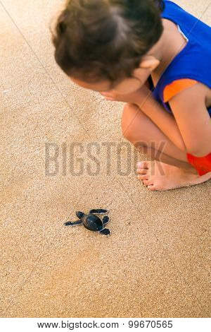 Child Watch Closely At Baby Sea Turtle