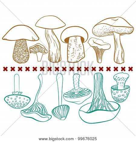 Poisonous and edible mushrooms vector table on white background
