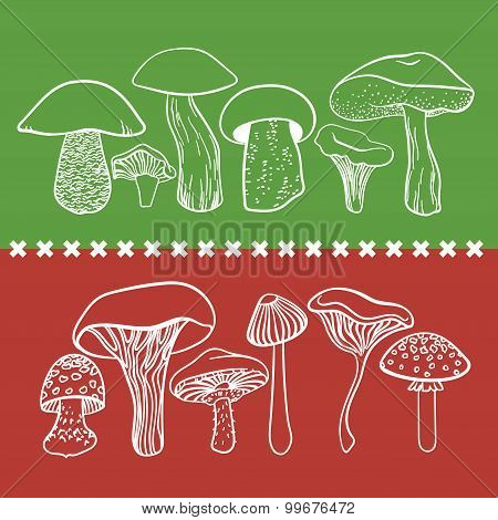 Poisonous toxic mushrooms vector table on white background poster