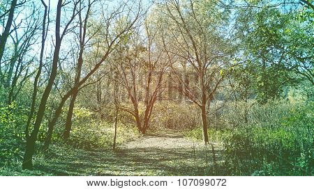Tree Clearing or Enclave. Brown and Blue Color Tone.