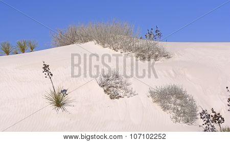 Desert Flora On The Sand Dunes