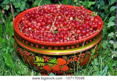 The Ripe Red Currant Gathered In A Cup