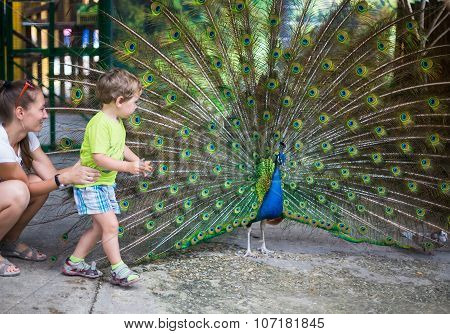 Child With Peacock