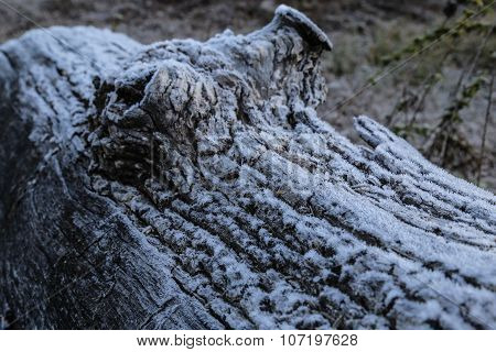 Frost on a log by lake