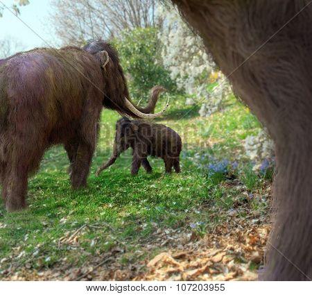 Woolly Mammoths In Meadow