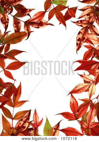 Nandina Leaf Frame