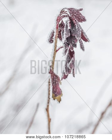 Frozen ice covered leaves and branches