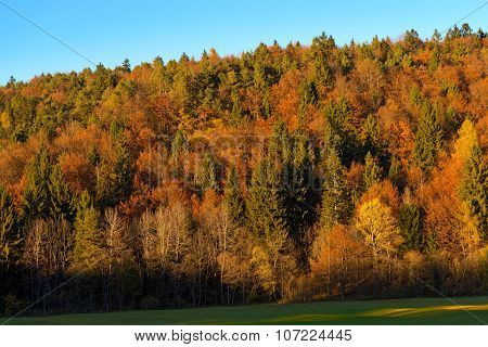 Autumnal Forest At Sunset - Trentino Italy