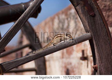 Wild Chipmunk Sitting On Piece Of Wood