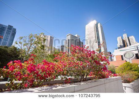 Pink blossoming flowers, Yerba Buena Gardens park