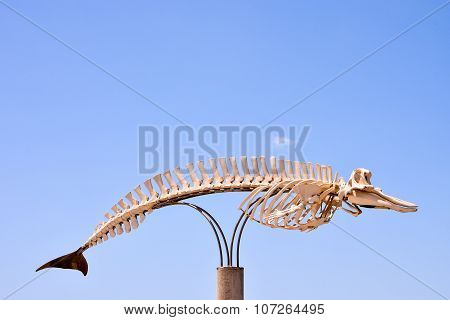 Photo Picture of the Dry Whale Mammal Skeleton poster