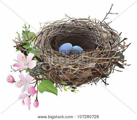 Bird's Nest with eggs.