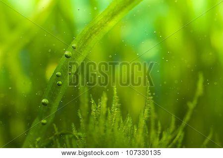 Bubbles And Algae