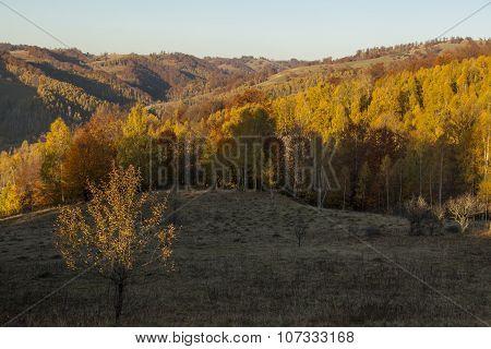 Autumn Forest In Hills