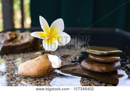 flower plumeria or frangipani decorated on water and pebble rock in zen style for spa meditation moo