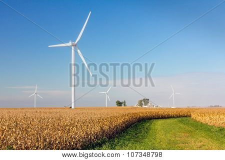 Wind Turbines In Cornfield