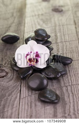 White Moth Orchid And Black Stones On Weathered Wood