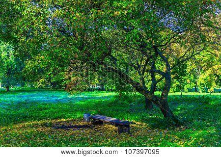 Bench Under Branchy Tree Among Green Grass
