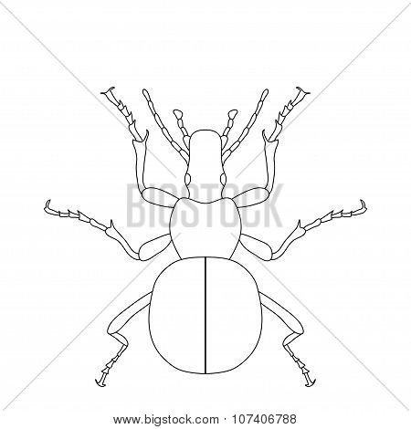 ground beetle bug. Carabidae. Sketch of ground beetle.  ground beetle isolated on white background.