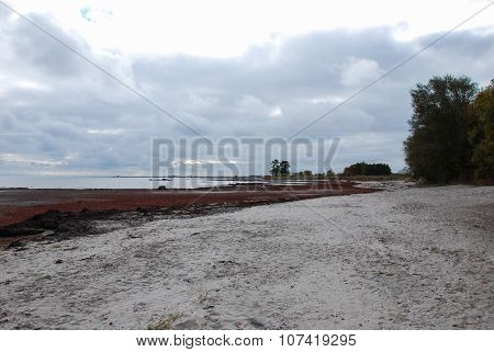 Colourful coastline at fall with red bladder wrack along the beach poster