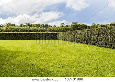 Beautifully Manicured Garden Bushes