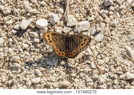 Butterfly On A Hiking Trail, Germany, 2015