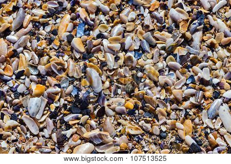 Sea shells on the beach as background