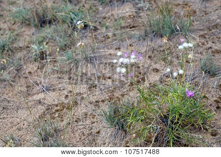 White And Lilac Flowers