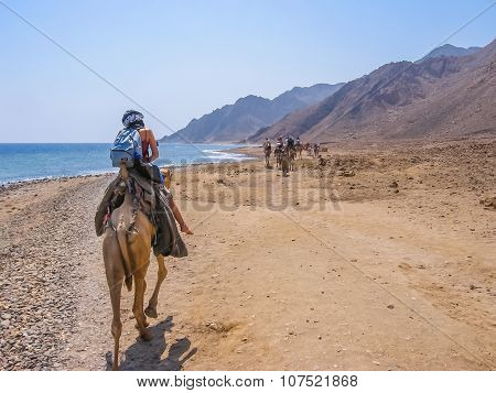 Tourist on camels in Egypt