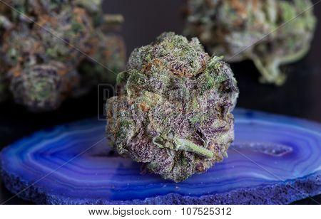 Purple Grap Ape Medical Marijuana