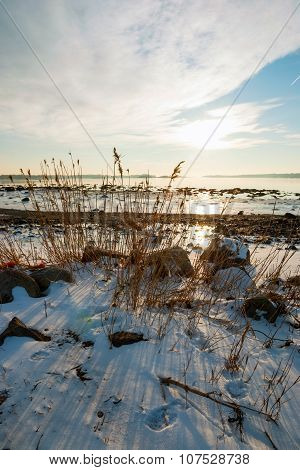 Dry grass in frozen winter fjord sunshine Norway poster
