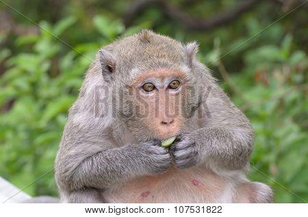 Portrait Of A Monkey In Wildlife