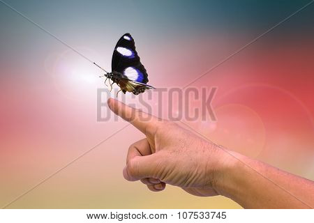 Hands and butterflies On blurred background.children going to be held in dad hand on the ground after blur background: Reforestation, sustainable world forest.happy,Card,posters, websites