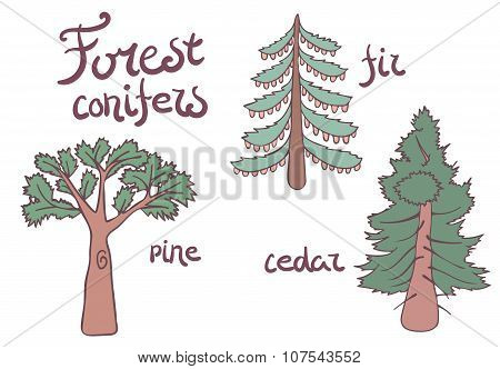Forest conifer trees set. Isolated plan