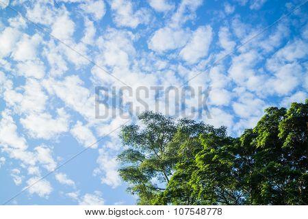 Beauty Blue Sky Behind The Tree