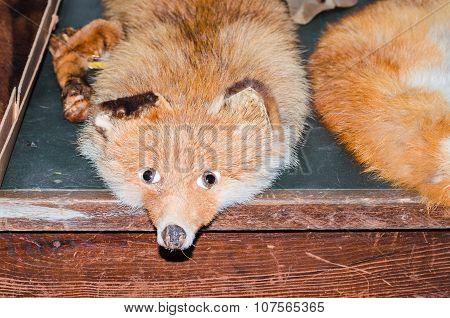 Antique Fox Stole