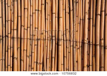 Fence Of Reeds