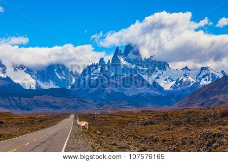 The highway crosses  Patagonia and leads to peaks of Mount Fitzroy. On the side of road is graceful guanaco